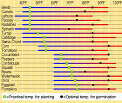 Flower Seed Germination Time Chart Guide To Seed Starting Part 3 Planting Budding Homestead