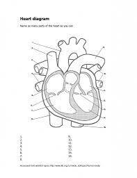 Diagram of the heart and labelling best human heart label human rh humanbodyanatomy co diagram of heart labeled diagram of heart labelled