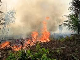 Seleksi mengerjakan soal tes twk termasuk dalam tahap seleksi kompetensi dasar penerimaan cpns. T J Soal Kebakaran Dan Asap Di Asia Tenggara Cifor Forests News