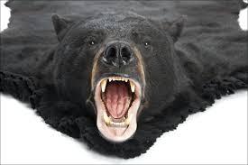 bear head rug fake bear rug with head good looking furniture awesome taxidermy polar for bear rug taxidermy minnesota