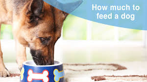 Heavy Sixteen Feeding Chart 2019 How To Feed Your Dog And Puppy With Feeding Charts