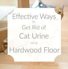 how to get dog out of wood floors hardwood smell urine vinegar floor cleaner