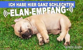 Sprüche Suche Hund Sprüche Lustig Facebook