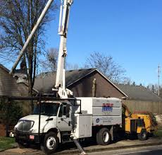 mountain view tree service serving willamette valley oregon mountain view tree service a97