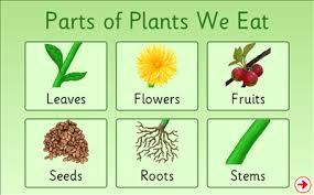 Resultado de imagen de plants parts