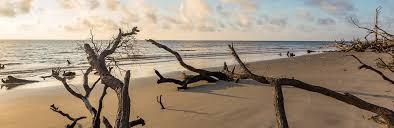 Jekyll Island Beaches Driftwood Beach Glory Beach Great