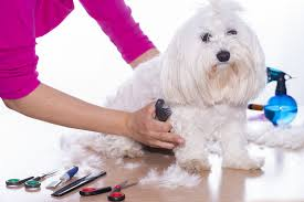 Dog Grooming Supplies 101 The Ultimate Buyers Guide Top Dog Tips