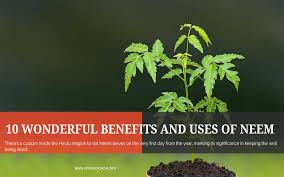 benefit and uses of neem tree azadirachta indica 10 benefit and uses of neem tree azadirachta indica