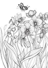 Kleurboek Voor Volwassenen Bloemen Daniela Jaglenka Terrazzini