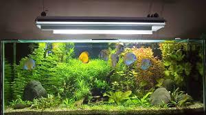 How To Set Up Fish Tank Maintenance Chart Aquarium Care