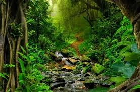 amazon rainforest. Contemporary Rainforest Amazon Rainforest In C
