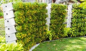 A concrete terrace fence that uses thick flowering plants to fill in the  gaps for privacy