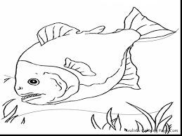 Small Picture stunning fish drawing coloring pages with fishing coloring pages
