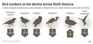 Us And Canada Have Lost Nearly 3 Billion Of Bird Population