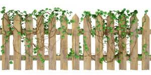 Climbing Plants That Grow In Pots To Hide A Fence  Home Guides Climbing Plants For Fence