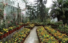 garden company. Modren Garden Company Garden Intended H