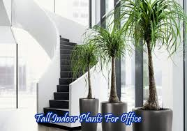 office indoor plants. Tall Indoor Plants For Office C