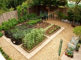 gardening advice for beginners part 1