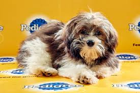 puppy bowl 2015 halftime. Unique Bowl Puppy Bowl XII To 2015 Halftime N