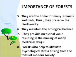 forest conservation essay forest conservation stock photos pictures royalty forest forest conservation environmental conservation concept as a forest of
