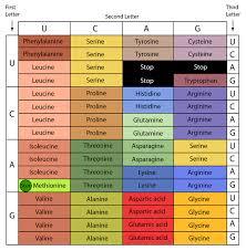 Universal Genetic Code Chart The Genetic Code