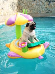 pool floats for dogs. Interesting Floats Pool Float Floats Dogs Dog Washable Bed Raft Rafts Waterproof  And Pool Floats For Dogs I