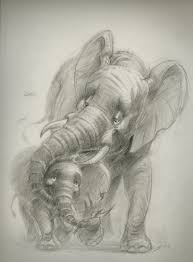 best images about elephant sketch an elephant 17 best images about elephant sketch an elephant drawings of elephants and elephant tattoo design