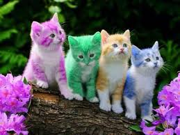 cute kitten cat photo gallery