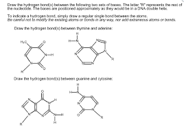 Solved Draw The Hydrogen Bond S Between The Following Tw