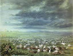 catlin paintings