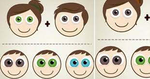 Eye Color Genetics Chart Eye Colour Genetics Chart Edad Estatura Peso Fotos