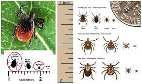 Cdc Tick Identification Chart Lyme Disease