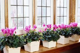indoor window garden. how to build an indoor window garden r