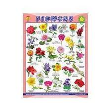Flower Chart Flower Chart United Publication Manufacturer In Tri