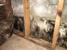 pictures of mold on drywall removing black from basement walls new reasons you might have a removing mold from basement walls r62