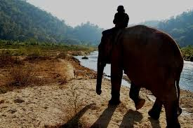 photo essay elephant nature park the river elephant