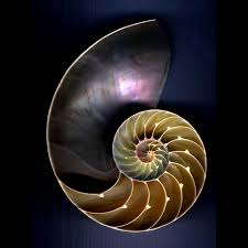 Psychological Growth Therapy As Nautilus Shell For Metaphor Bramham BpAAqv