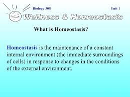 What Is Homeostasis In Biology Homeostasis