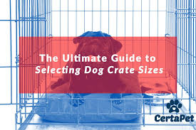 dog crates size chart the ultimate guide to selecting dog crate sizes certapet