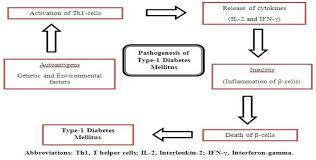 A Schematic Diagram For Pathogenesis Of Type 1 Diabetes