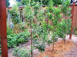 Barriers To Growing Fruit Trees Fruit Trees Are Too Hard To ManageFruit Tree Hedgerow
