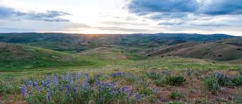 Image result for drawings of boise foothills