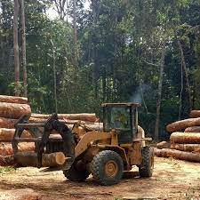 Even if Bolsonaro leaves power, deforestation in Brazil will be hard to stop