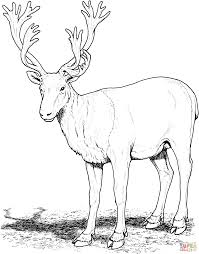 Download coloring pages printable reindeer coloring pages. Reindeer Coloring Pages Coloring Rocks