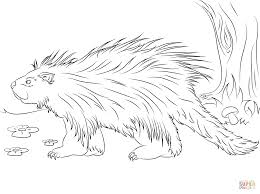 Small Picture Cute Porcupine coloring page Free Printable Coloring Pages