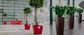 office plant displays. Live Plant Displays Office C