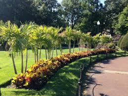the boston public garden s famed palm trees
