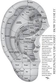 Acupuncture Auricular Points Chart Ear Seeds Acupressure Points Chart Www Bedowntowndaytona Com