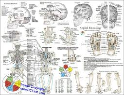 Applied Kinesiology Poster Clinical Charts And Supplies