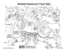 Food Web Coloring Pages Clipart Of A Sketched Black And White